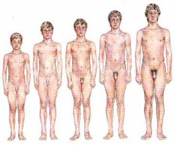 Resultado de imagem para orgãos reprodutores masculino e feminino