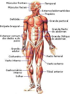 Sistema Muscular Só Biologia