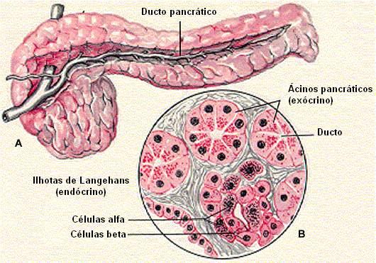 diabetes tipo 2 y células beta en el páncreas