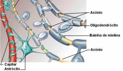 Células Nervosas Só Biologia