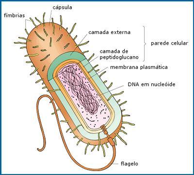 Funciones del citoplasma bacteriano