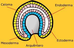 Figuras dos sistemas do corpo humano