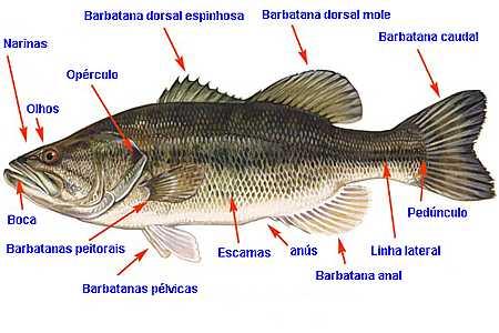 Peixes Cartilaginosos Só Biologia